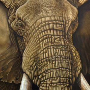 Elephant bull horizontal art print