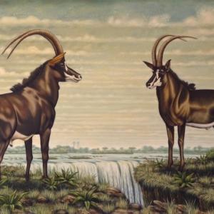 Sable antelope at Victoria Falls print