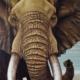 Elephant Bull 5 Art Print