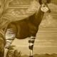 Okapi Sepia Art Print
