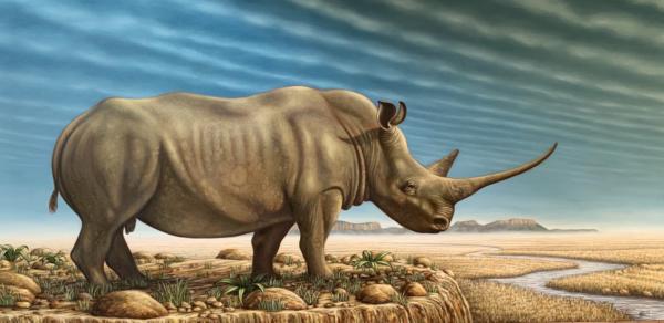 White Rhino Art Print